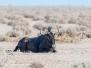 Namibia Etosha 2