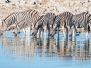 Namibia Etosha 3