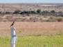 Namibia-Tag2