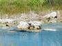 Southern USA - Tag 17: Everglades